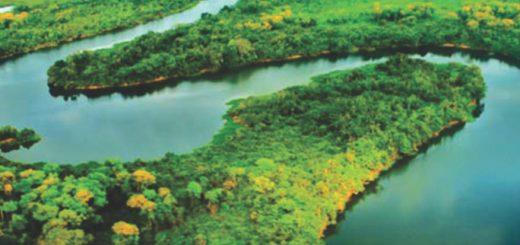 Dia Mundial das Florestas1